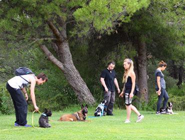 Les cours collectifs - Dressage et Education Canine - Les Pennes Mireabeau - Marignane - Saint Victoret - Vitrolles
