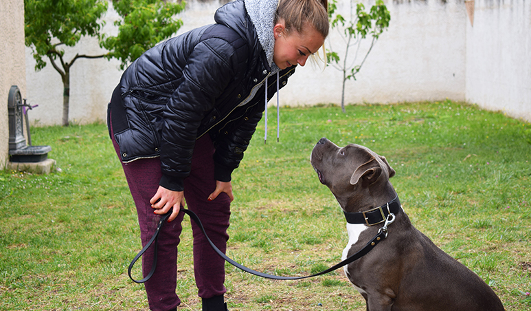 Les cours individuels - Dressage et Education Canine - Les Pennes Mireabeau - Marignane - Saint Victoret - Vitrolles
